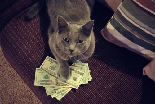 猫に小判で新ビジネス? 「猫とお金」の写真ばかり集めたブログCashCats.biz