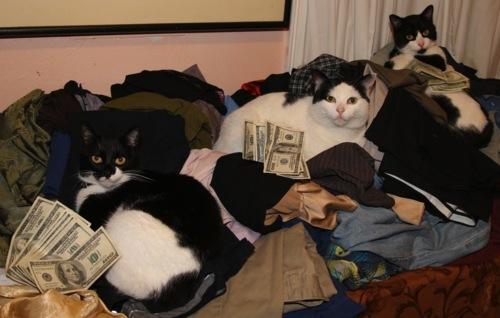 cashcats-3